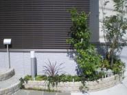 花壇の寄せ植え